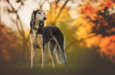 African Dog Breeds - South African Dog Breeds