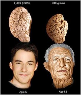 Изменение мозга человека с течением времени