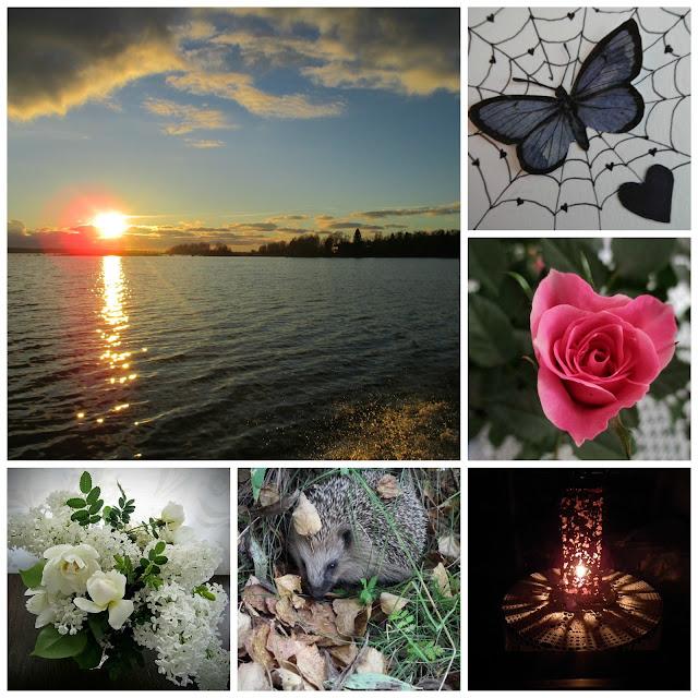 ruusu, siili, juhannusruusu,valkoinen syreeni, meri, auringonlasku, perhonen, lyhty, valo