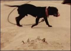 BOUDREAUX' ELI (2XW) | SPORTING DOG NEWS