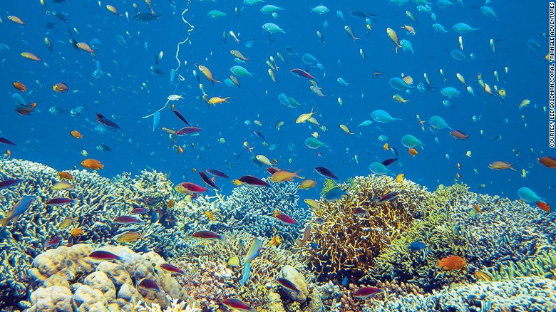 Free 3d Scenic Wallpaper 10 Of The World S Best Snorkeling Destinations Most