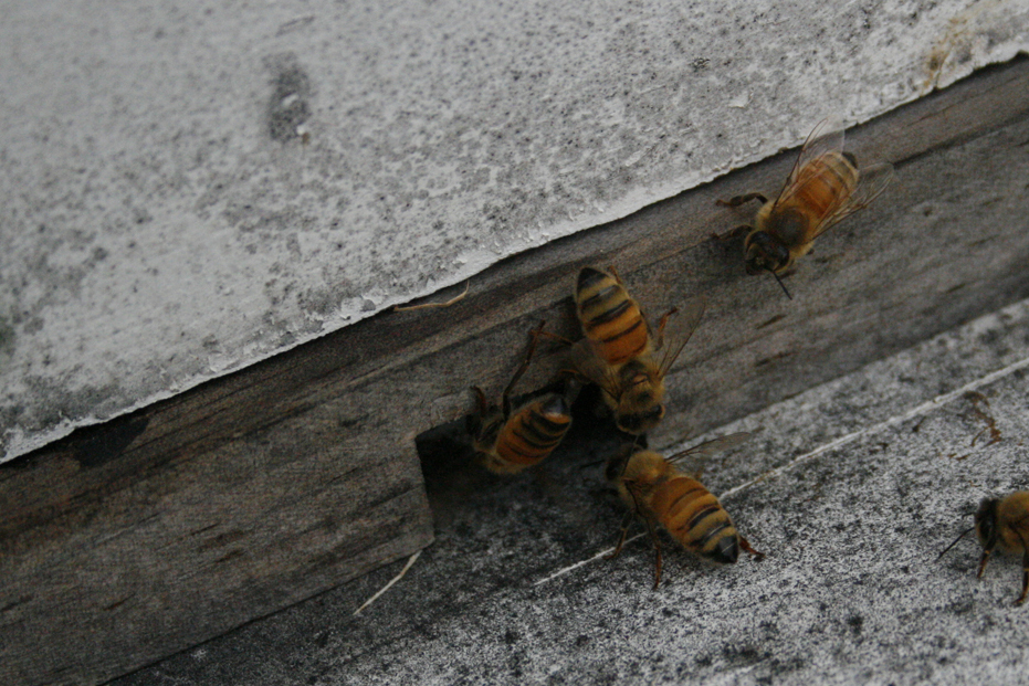 Beekeeping From The Beginning