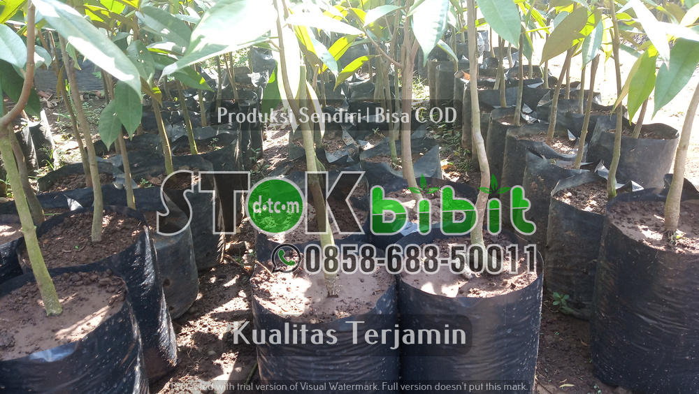 Jenis-jenis Buah Durian    Grosir       Lengkap