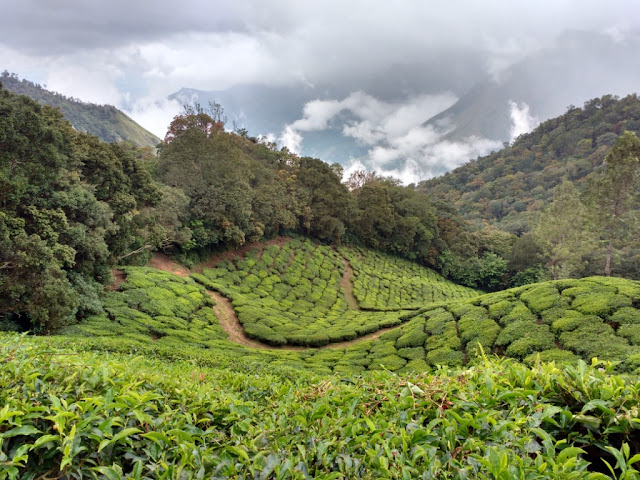 Must see in Munnar