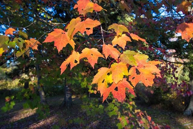 Rochester-Lago Dunmore-Foliage