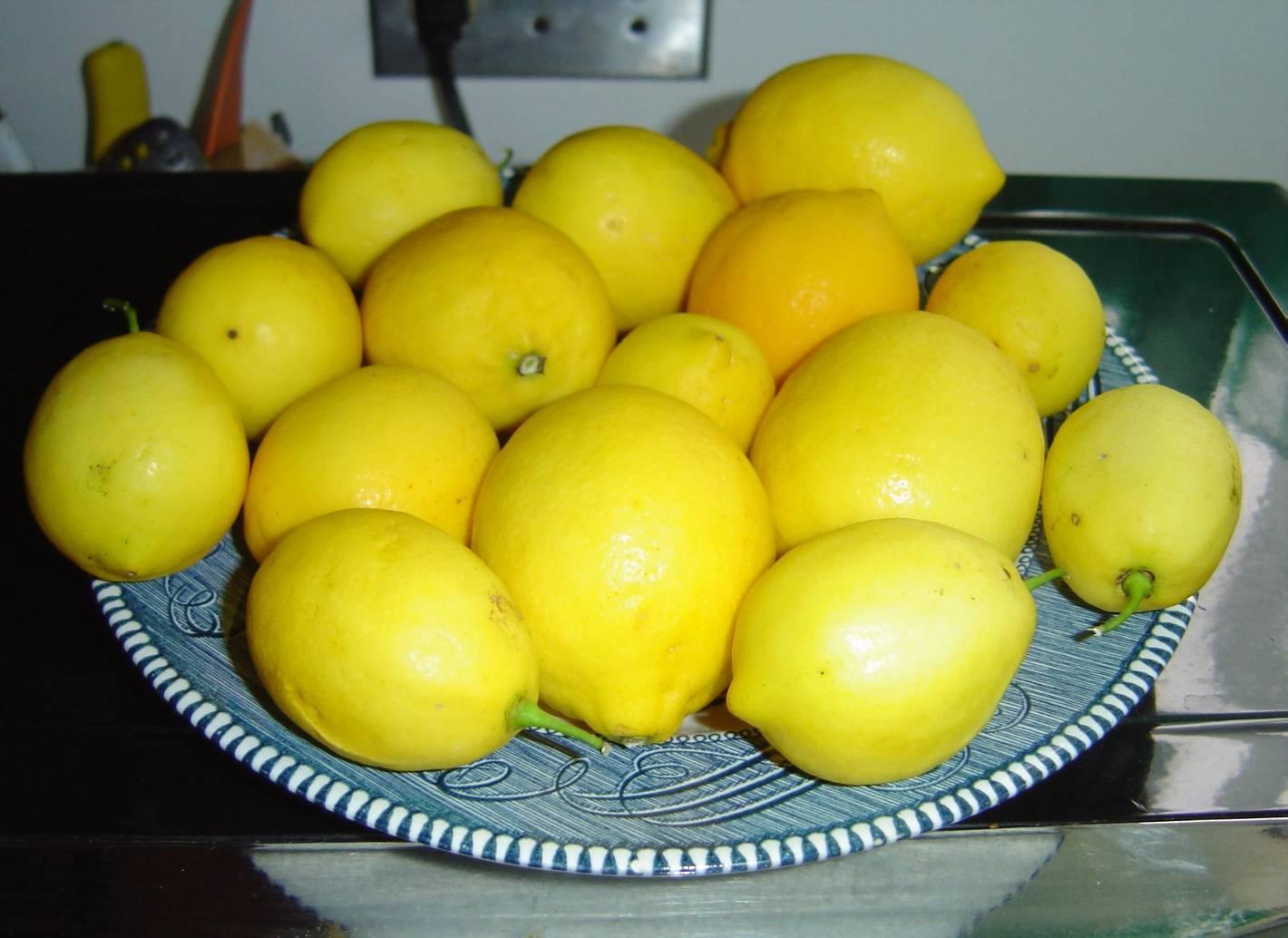 Lemons for My Lemon Sweet Buns With Lemon-Sugar Coating