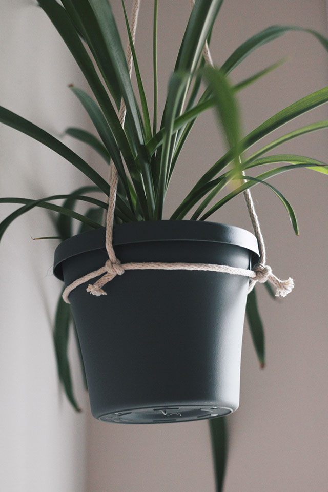 Hanging a Plant, Simple-Style