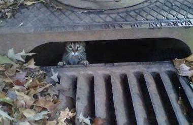 Lost Cat Finder Pet Detective Lost Cat Hiding Places