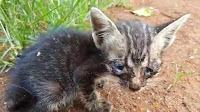 Menabrak Kucing Tidak Sengaja Tidak Berdosa