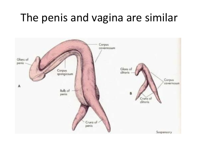 Person born with penis and vagina