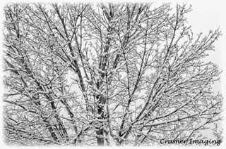 Professional quality fine art nature photograph of a tree covered with snow in Pocatello, Bannock, Idaho by Cramer Imaging