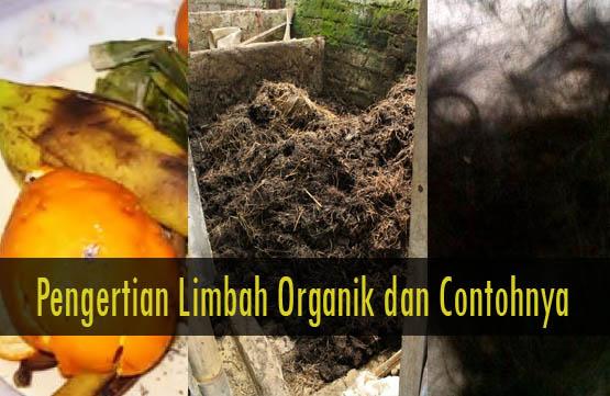 yaitu limbah organik dan limbah anorganik 20+ Contoh Limbah Organik, Gambar, dan Penjelasannya
