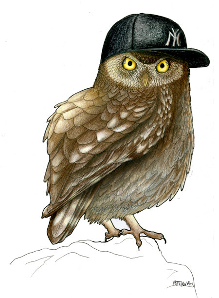 Funny bird illustration little owl in a NY cap