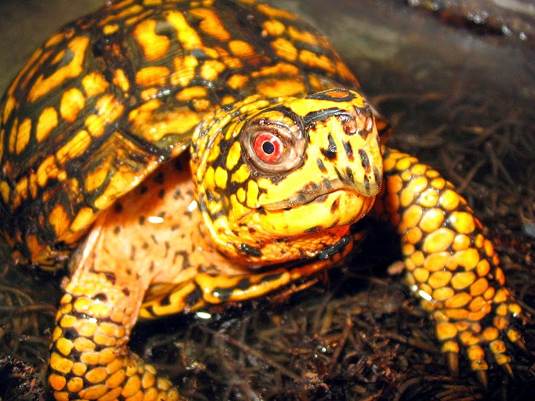 Can Pet Turtles Get Sick?   Pawsitively Pets