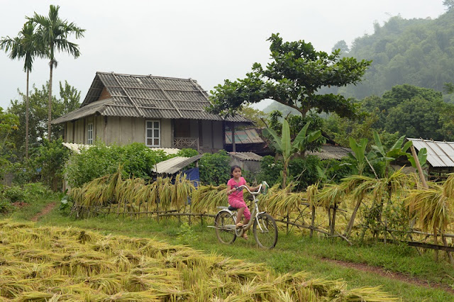 Beautiful Mai Chau Surprise In The Harvest Season 2