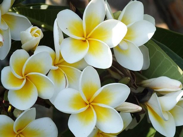 As 10 Flores Mais Bonitas Do Mundo Natureza Bela