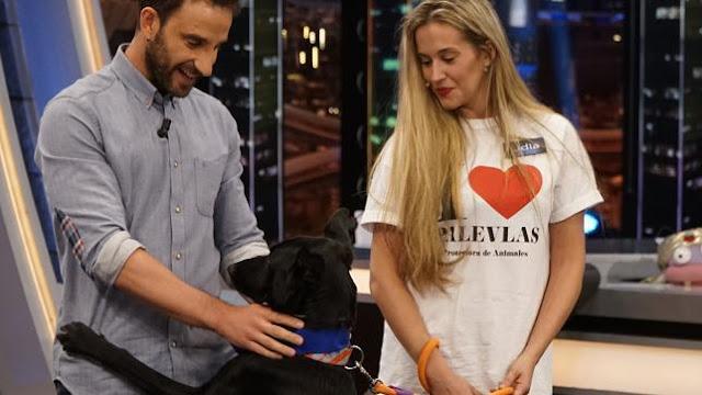 Dani Rovira adopta a un perro en pleno programa de televisión