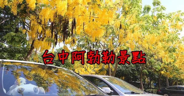 台中賞阿勃勒6個景點|黃金雨|泰國國花|金光閃閃的行道樹|持續更新