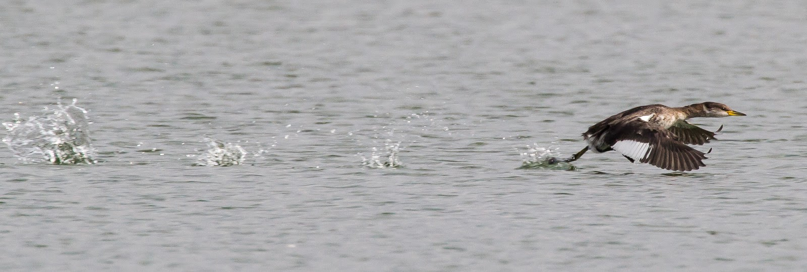 Oxon Birding Blog: Farmoor 28th September