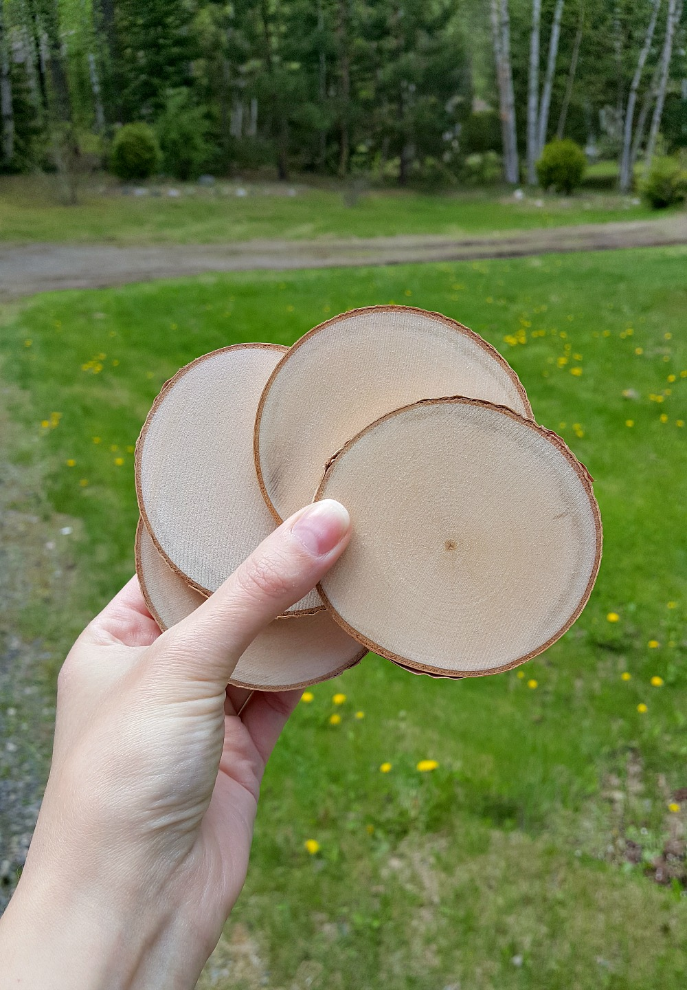 DIY Birch Wood Slices