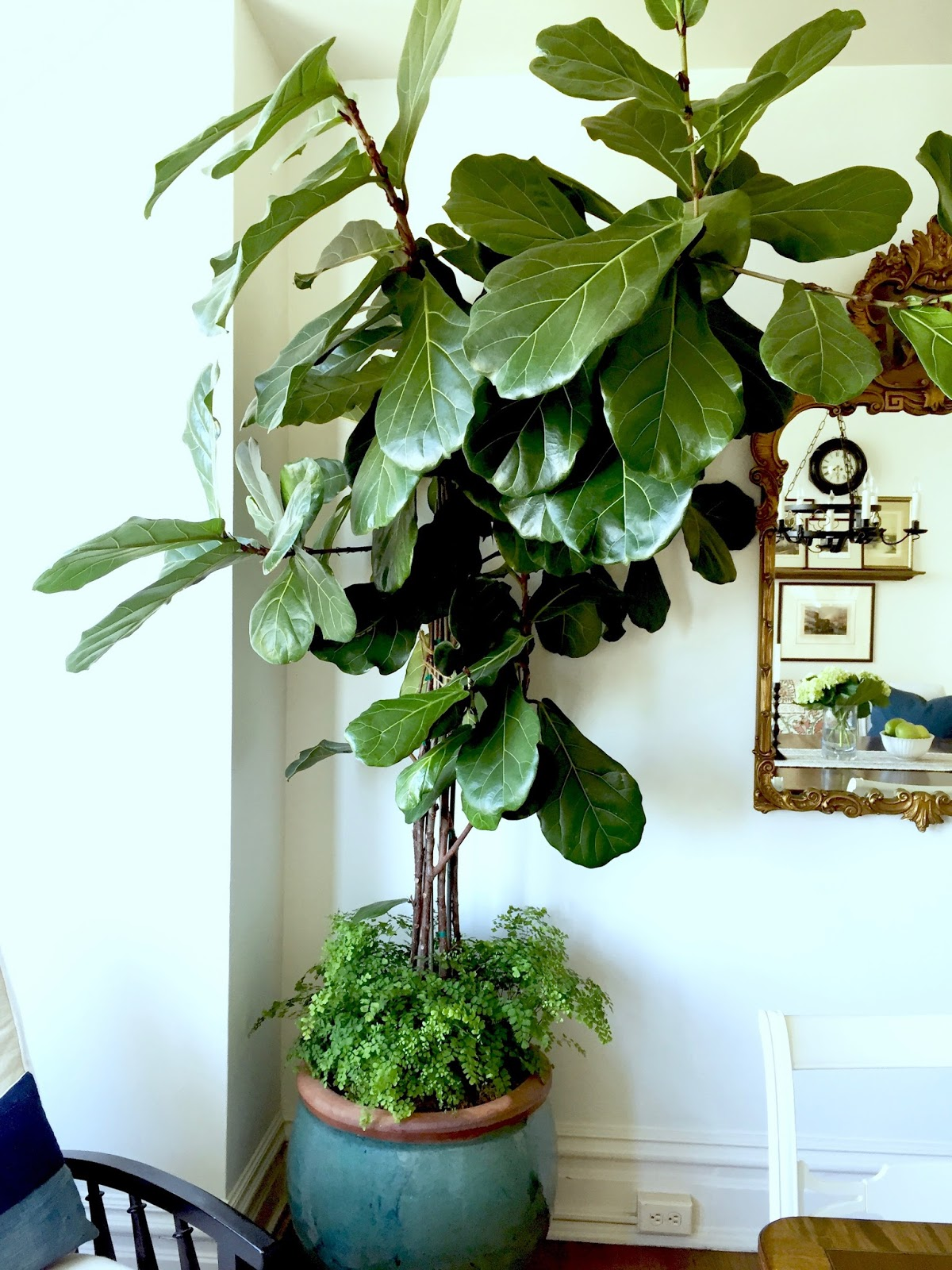 Classic casual home our more comfortable dining room for Classic house plants