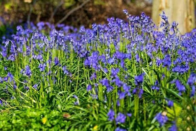 anh hoa chuong xanh dep nhat 1