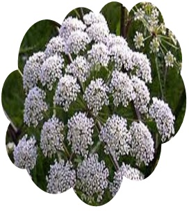 introduction to medicinal plants About 250,000 higher plant species on earth, more than 80,000 species are reported to have at least some medicinal value and around 5000 species have specific therapeutic value herbs are.