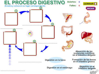 http://www3.gobiernodecanarias.org/medusa/eltanquematematico/pizarradigital/AparatoDigestivo/actividades/actividades4_p.html