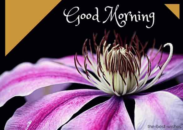 good morning images with clematis blossom bloom flower