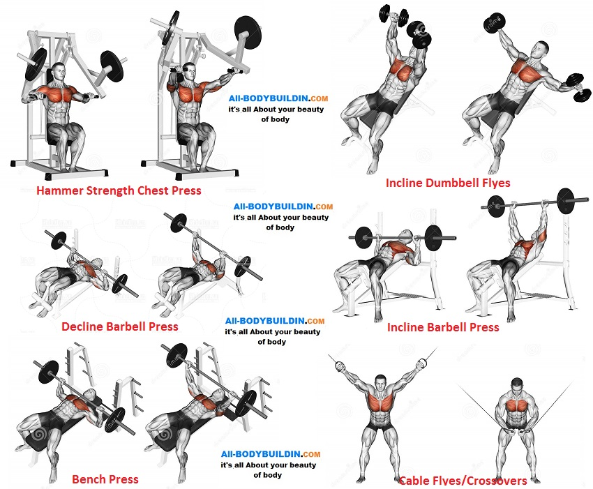 Chest Training Program for Muscle Mass, Definition, and ...