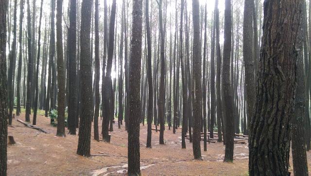 Hutan Pinus Imogiri Yogyakarta