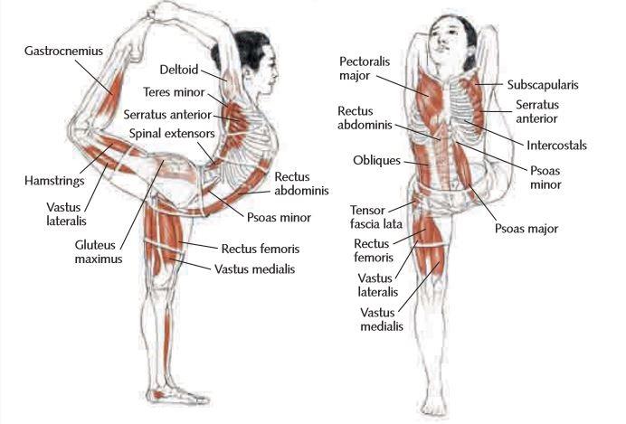 Quiero Aprender Yoga: Posturas: Natarajasan VIII (Anatomía asociada)