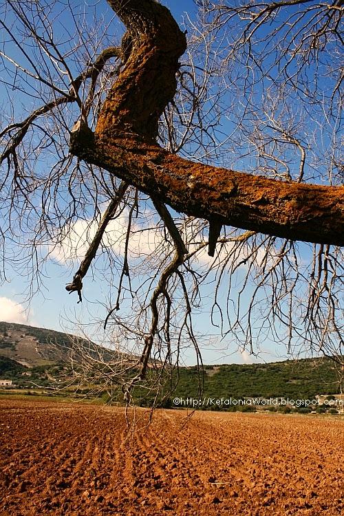 Omala Valley, Kefalonia