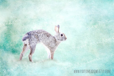 Nursery Bunny Rabbit Woodland Animal Wall Art. Sweet Jack. You can purchase and download our photography creations and instantly print at home from our Paper Meadows Photography Shop on ETSY. To Visit our shop now click here.