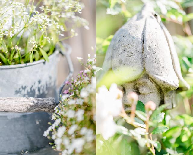 Gartenimpressionen im Herbst, Pomponetti