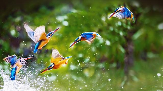 Top-10-Stunning-Birds-In-World