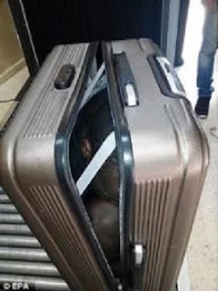 CAUGHT In The Act, Woman Smuggles Teenage Boy In Suitcase; See Photo