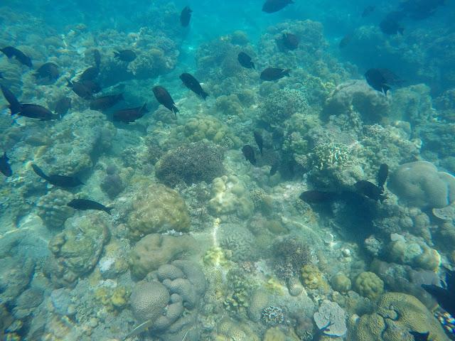 Binukbok Seascapes and Marine Sanctuary