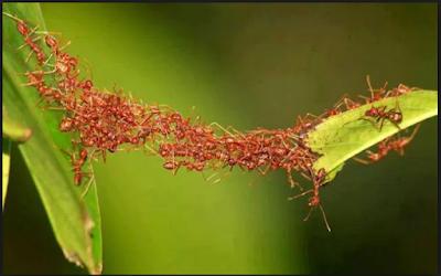 belajar tawakal dari semut
