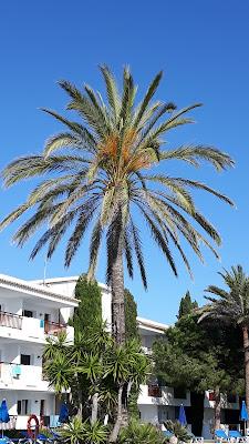 Familienhotel Cala d´Or Cala Azul Garden