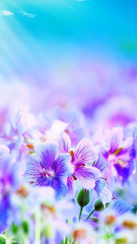 Purple Petunias Field  Galaxy Note HD Wallpaper