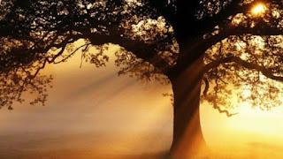 Pensamentos do alto de uma árvore