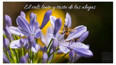 8d8c2e8f656926322943cc50269086e9 - Efectos de la agricultura industrial y ecológica en las abejas - El Apicultor Español: Actitud y Aptitud Apícola