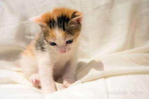 gatitos en adopcion 4