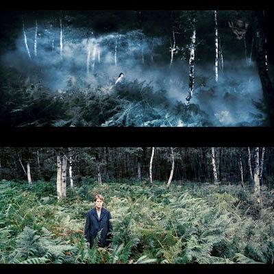 La forêt filmée par Lars Von Trier dans Antéchrist (2009)