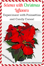poinsettia and candy cane science experiments