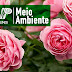 ZPP Meio Ambiente: 10 plantas ornamentais - quais florescem na primavera?