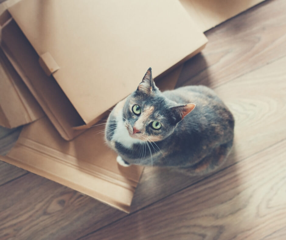 A grey coloured cat with green eyes looks up at the camera while standing on folded boxes. Beneath the boxes is a dark wood floor.