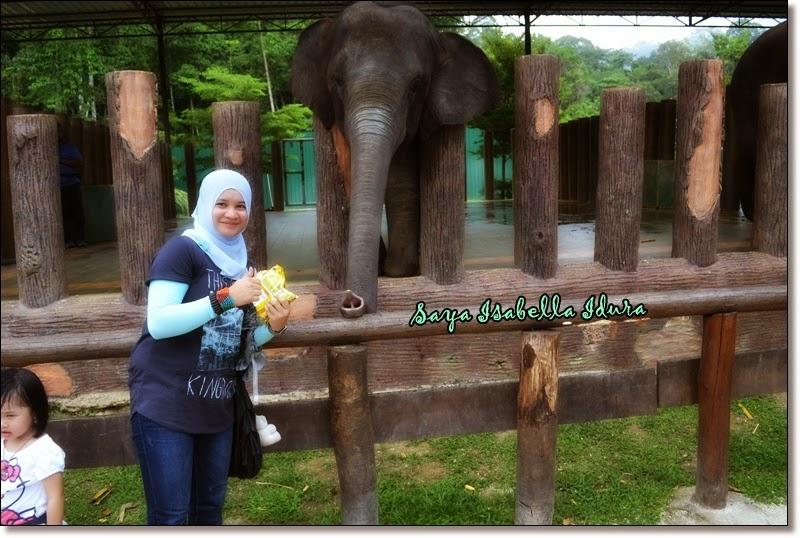 main dengan belalai gajah