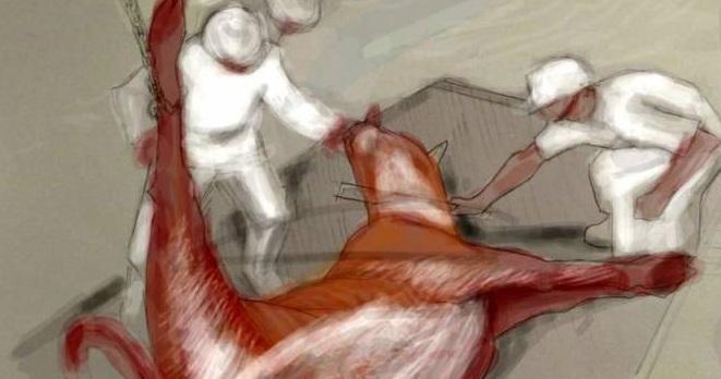 """Κάτι απο παλιά - Κοσέρ: Η σφαγή ζώων χωρίς αναισθητοποίηση για """"μεγαλύτερη απόλαυση""""  των Ιουδαίων στην Ελλάδα"""